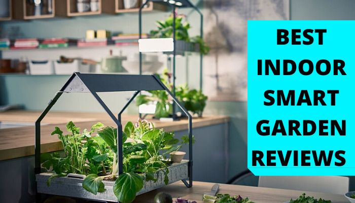 Best Indoor Smart Garden